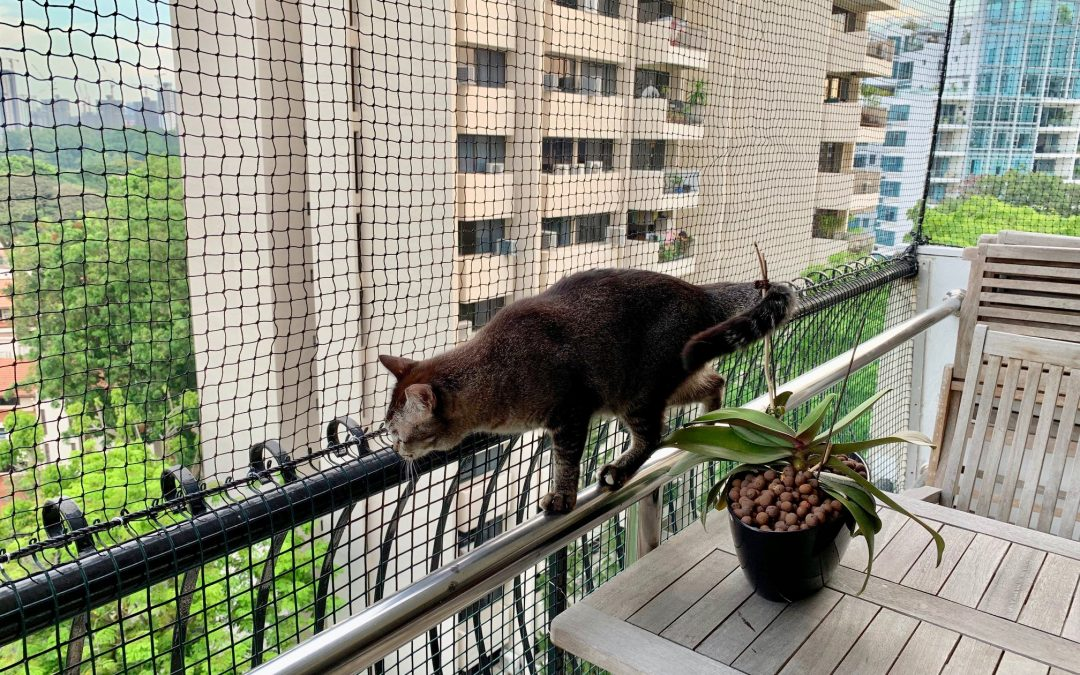 Balconies and Windows Can Be Death Sentences to Your Cats!