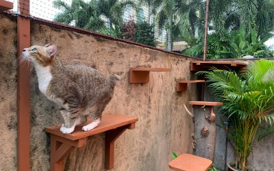 Safe Garden With Catification for Enriched Cat Experience