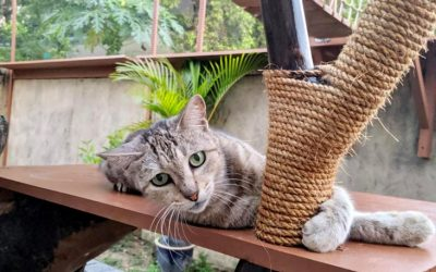 Catify Your Garden with Cat Trees and Edible Plants