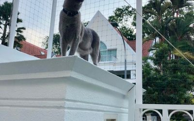 Meshing A Landed Property To Protect Your Cats