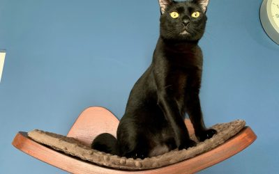 """Black Black"", Our Black Beauty Cat of The Month!"