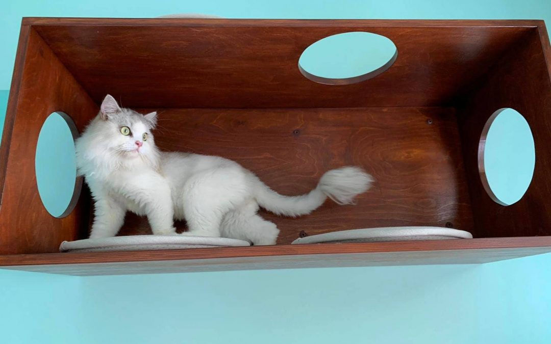 A Touch of Vintage Cruise Ship for Your Cat's Catification